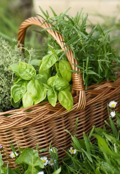Cercosano per benessere globale ortoinautunno for Cosa piantare nell orto adesso