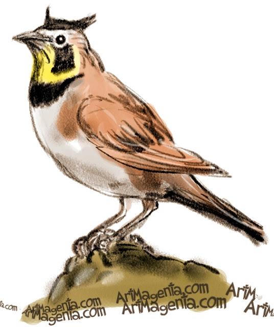 Horned Lark sketch painting. Bird art drawing by illustrator Artmagentaa