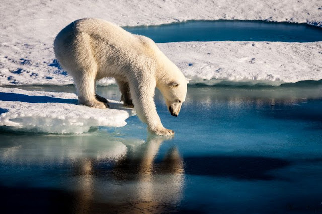 Humans to blame for bulk of Arctic sea ice loss: study