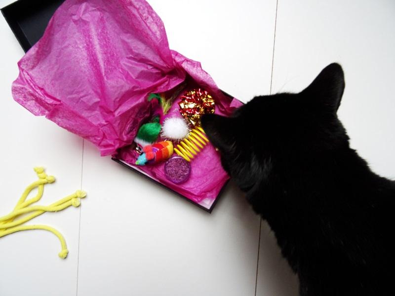 L'île aux Chats : Marie la box de l'été Gucci le chat
