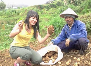 cara budidaya kentang dalam polybag,cara budidaya kentang hidroponik,cara budidaya kentang aeroponik,tanaman kentang,cara menanam kentang,masa panen kentang,umur panen kentang,pemupukan kentang,