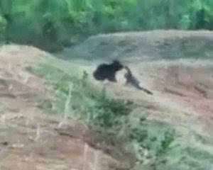 Ведмідь роздер таксиста під час спільного селфі