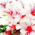 Flowers pics Εικόνες με Λουλούδια