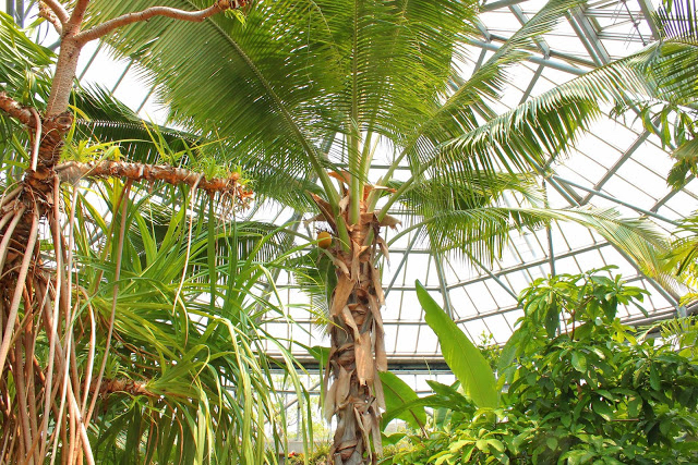 山口県、宇部市のときわ公園の植物園がリニューアルしたよ【Y】 プラントハンター西畠清順、世界を旅する植物館  熱帯アジアゾーン、ヤシの木やバナナの木