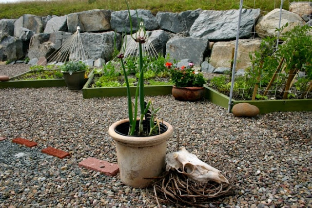 Garden decor with found objects: skull