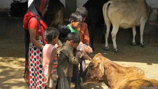 देशी भारतीय गाय का घी के फायदे