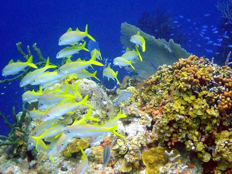 marine ecosystem The importance of marine predators in the provisioning of ecosystem services by coastal plant communities 4th september 2018 published under: data tools & methodologies this paper was originally published in frontiers in plant science.