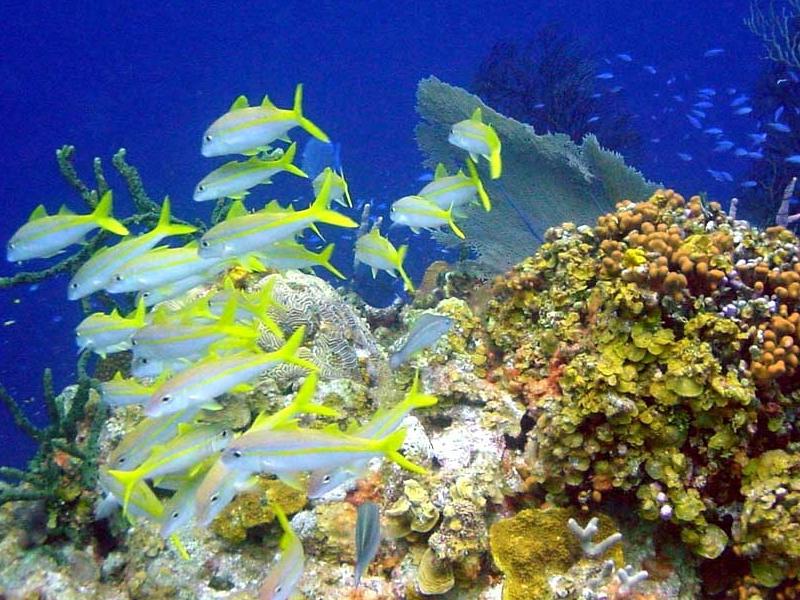 Aquatic Biome Plants