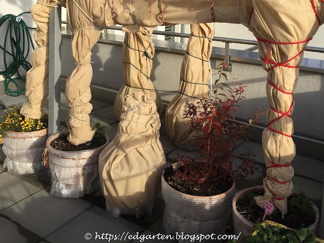Topfpflanzen eingepackt in Vlies für Winter