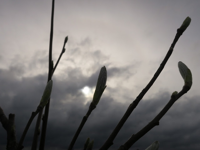 Leaf buds on twigs on wall with dark, cloudy sky.