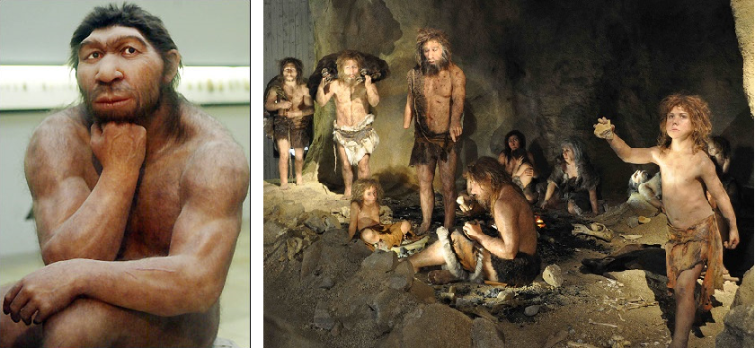 Q Significa Neanderthal The Mayflower Tree: Th...