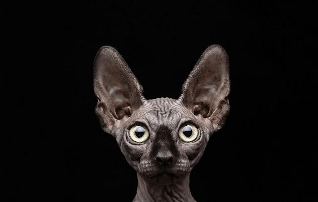 Кот костян блог ютюб