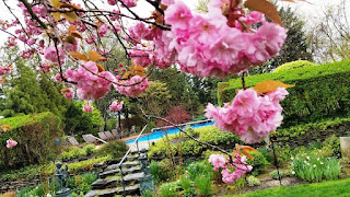 stone steps to a sparkling pool, cherry blossoms in the foreground