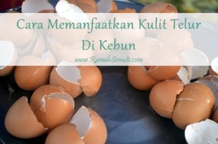 Cara Memanfaatkan Kulit Telur untuk Menyuburkan Tanah dan Tanaman