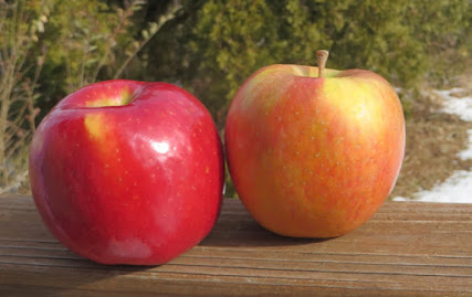 Two large orange-red apples