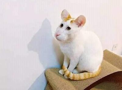 Ini Tikus atau Kucing?