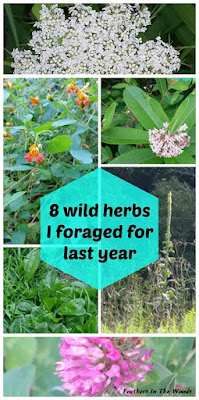 How to forage for wild herbs