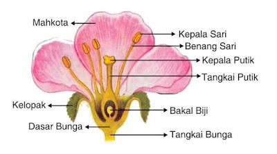 Bagian-Bagian Dari Bunga dan Fungsinya