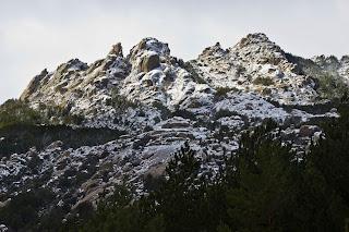Pajarito Nevado Invierno La Pedriza Madrid