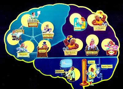 que controla el cerebro · conlosochosentidos.es