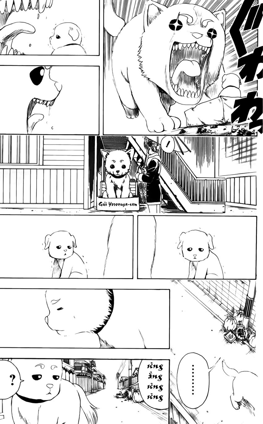 Gintama Chap 401 page 8 - Truyentranhaz.net