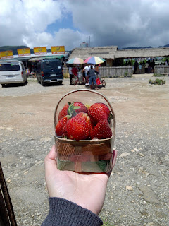 strawberries in pack baguio