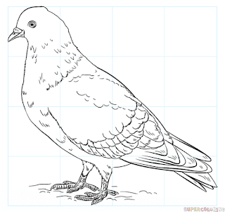 Most Popular Pigeons Coloring Pages For Free