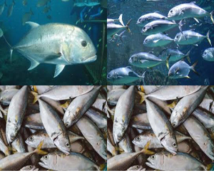 SMK Jurusan Agribisnis Perikanan Air Payau dan Laut