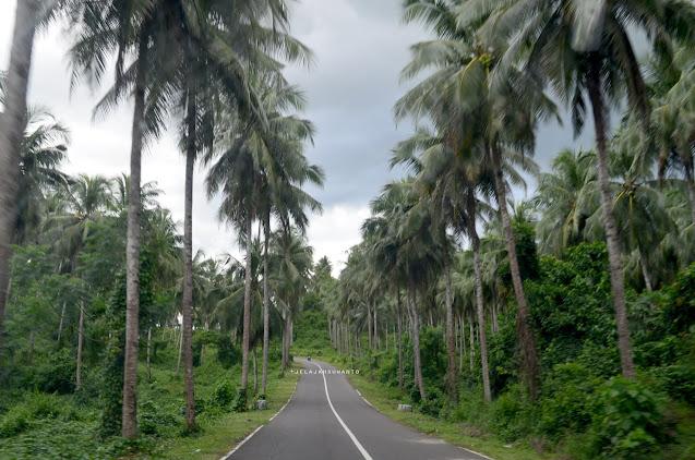 Jalan menuju Bukit Pulisan, Likupang Timur, Minahasa Utara, Sulawesi Utara +jelajahsuwanto