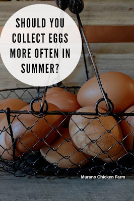 egg collecting in summer