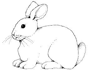 Cute animal rabbit coloring books sheet for kids drawing ...