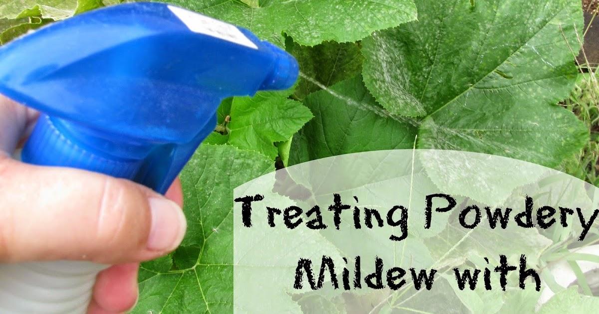 Treating Powdery Mildew With Vinegar