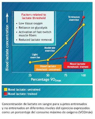 Sistema energético anaeróbico láctico o sistema anaeróbico glucolítico
