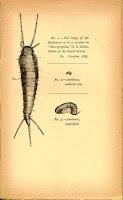 gusanos de humedad