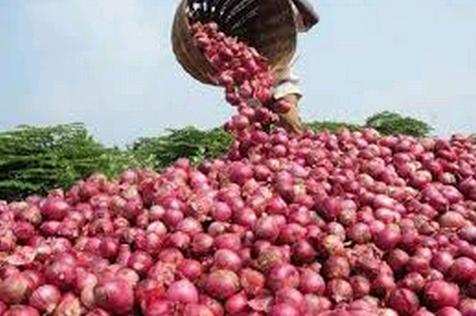 pupuk pembesar buah bawang merah