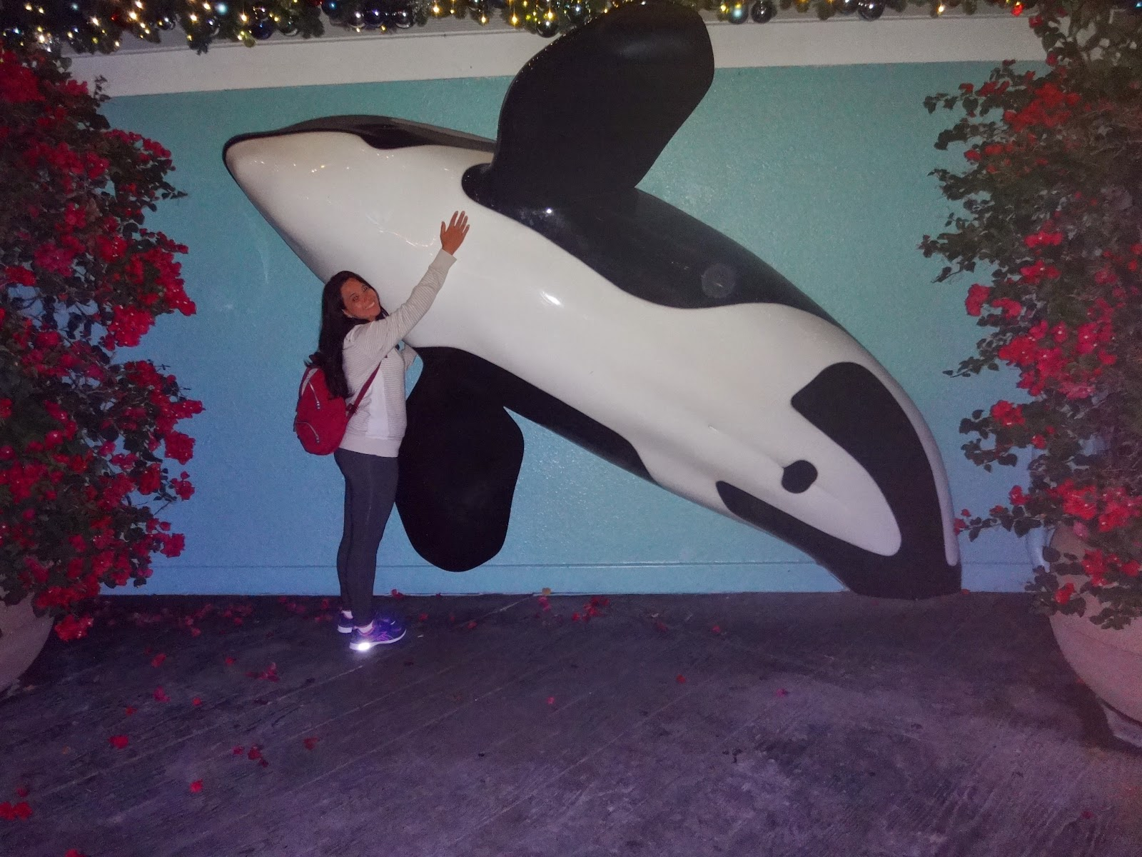 orca - parque sea world - orlando, florida
