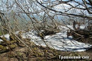 Травневий сніг