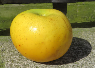 Belchard apple