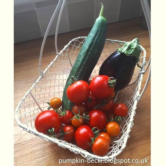 tomatoes aubergine cucumber harvest