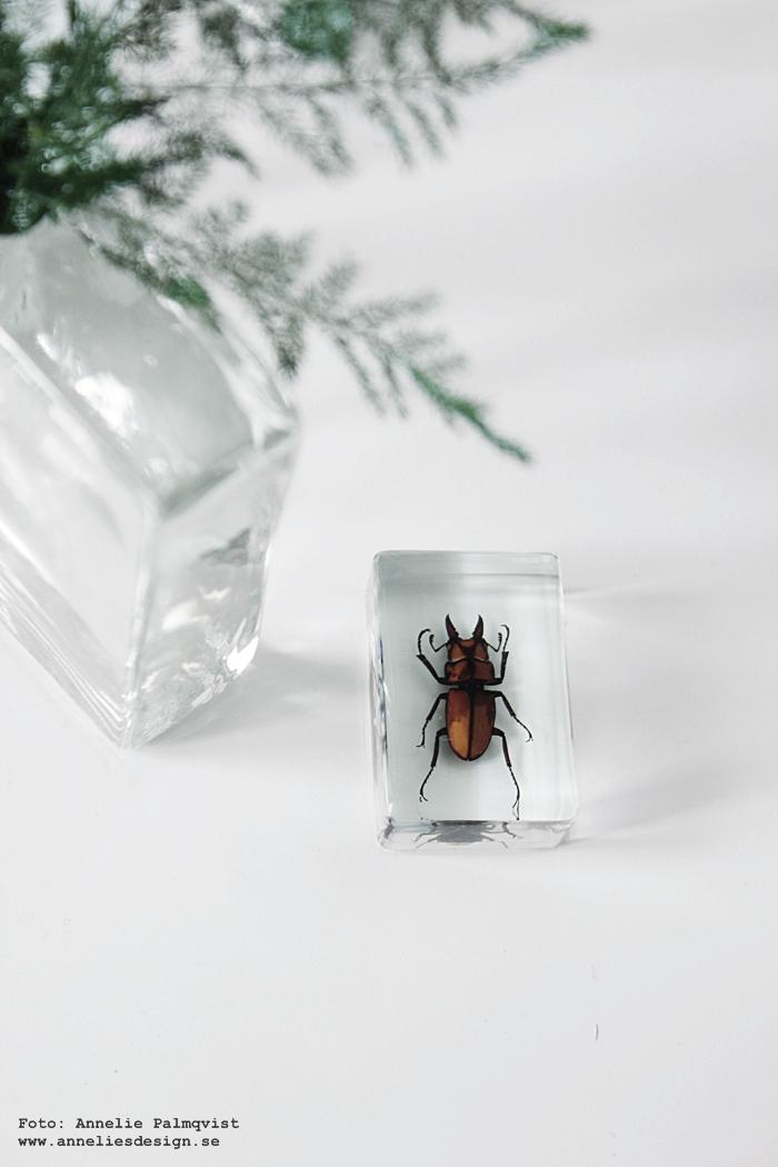 insekt, insekter, skalbagge, skalbaggar, skalbaggen, webbutik, webbutiker, webshop, annelies design, klevering, 6klevering, holland, amsterdam, i plastkub, hårdplast,