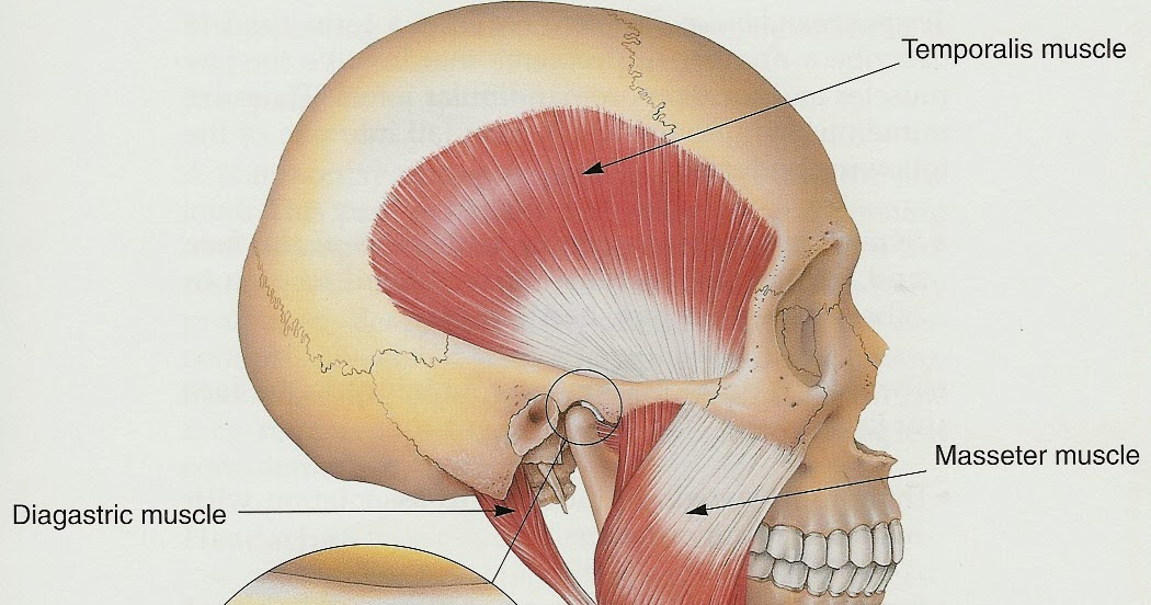 Q&A Time! Medial/Lateral Glides for TMJ Lateral Deviation | Modern ...