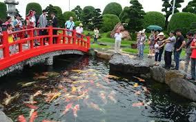 Tham quan Công Viên Cá Koi Rin Rin Park tại - Vườn Nhật Bản cực đ1ã