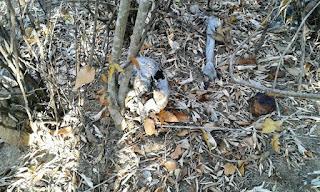 Ossada humana é encontrada na zona rural de Nova Floresta