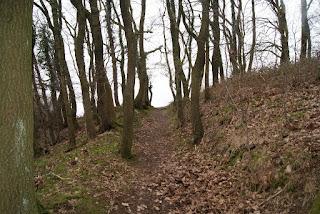 Ein Wanderweg, der bergab durch Bäume hindurchführt. Rechts daneben geht ein Hang bergauf.