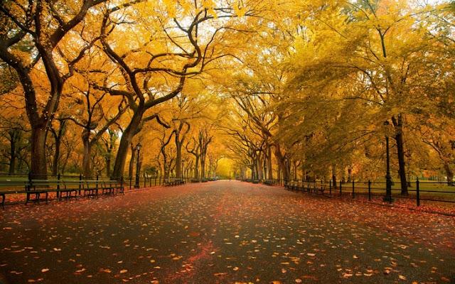 Outono em Istambul na Turquia