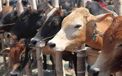 PGs for Cattle Launched by Haryana Government
