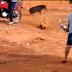 Cenas Fortes! Em Eldorado briga de cachorros choca moradores após vídeo que circula nas redes sociais