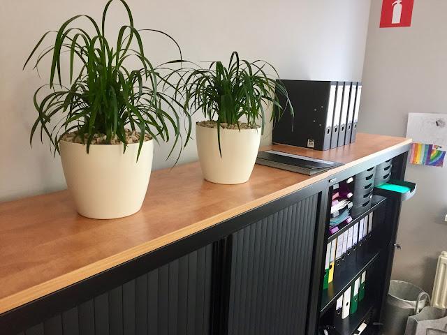 kantoorruimte plantenverhuur