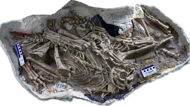 Penemuan Spesies Baru Dinosaurus dari Kelompok Burung Purba