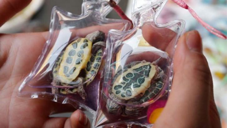 Chinese Cities Are Still Selling Live Animal Key Chains, And The World Is Furious